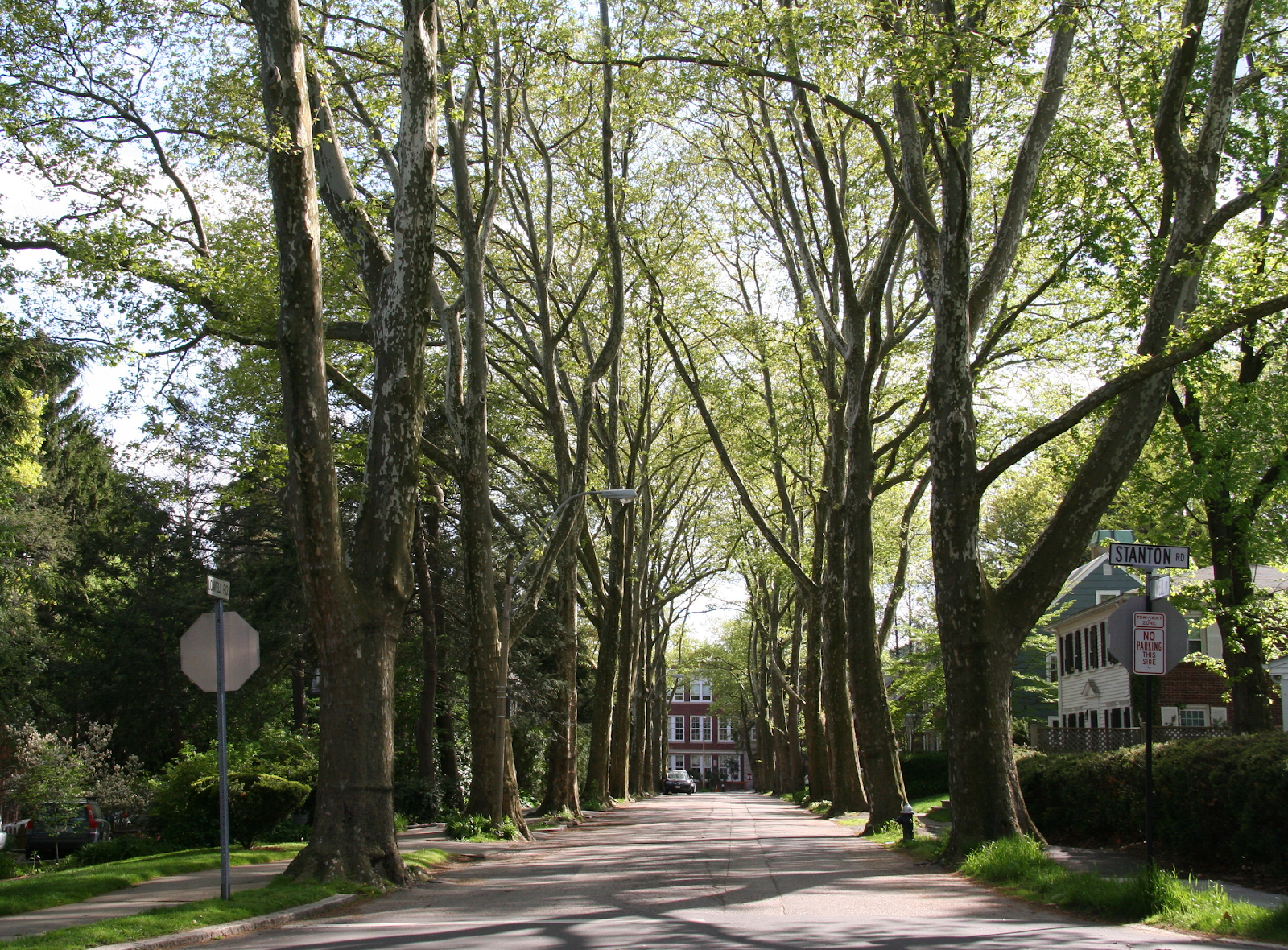 Large trees lining Lowell Road